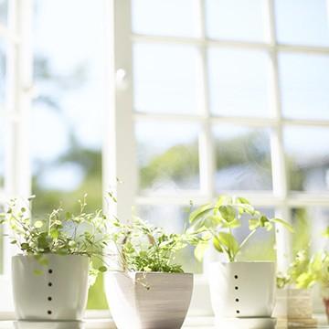 Основные способы создания в квартире здорового микроклимата