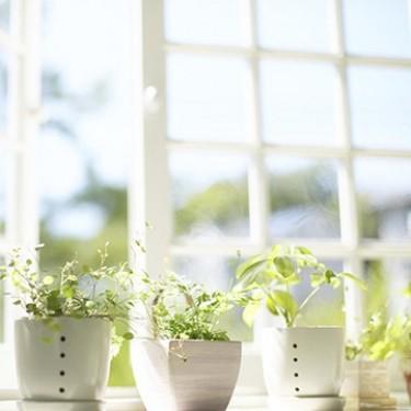 Основні способи створення в квартирі здорового мікроклімату